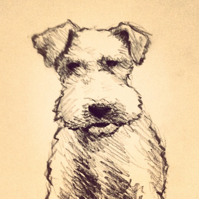 Sadie the Fox Terrier